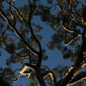 manly tree lopping northern beaches