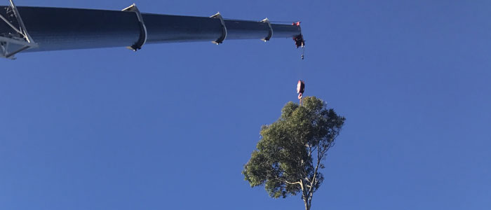 northern beaches tree removals