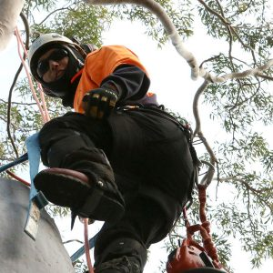 sydney arborist northern beaches