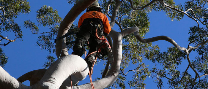 terrey hills tree loppers northern beaches