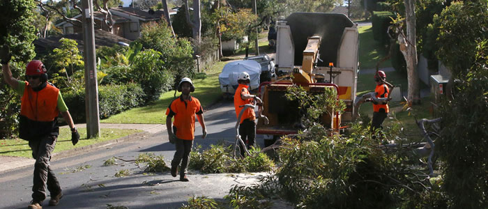 tree branch removal northern beaches